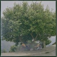 112_vietnam-001b-6x6-weba.jpg